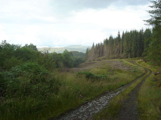 fearnoch forest taynuilt